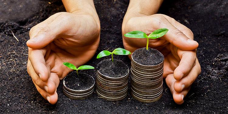 The economic value of macadamia farming in SA